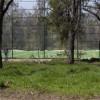 15 copaci din Parcul Feroviarilor tăiaţi ilegal