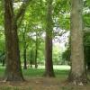Gruia, cel mai verde cartier al Clujului. Mărăștiul, cel mai... suferind